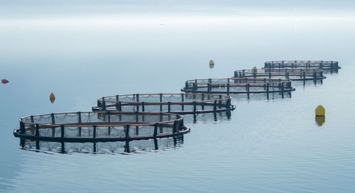 Boldly going where no consultant has gone before: Using eDNA to monitor aquaculture