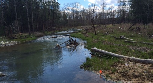 If you build it, they will come: Designing a self-sustaining trout stream