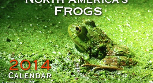 Finding, protecting, and celebrating our frog friends