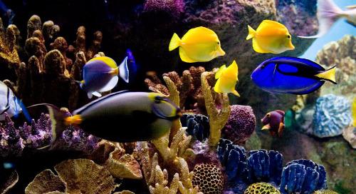 Do fish have feelings?