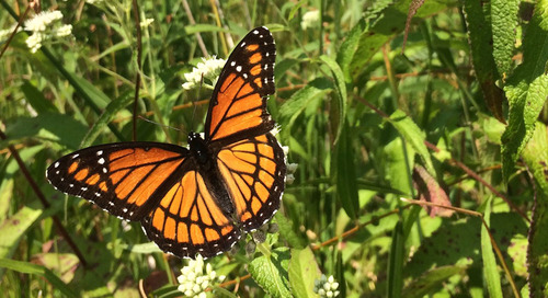 The buzz on pollinators: Why their declining population is bad news for everyone