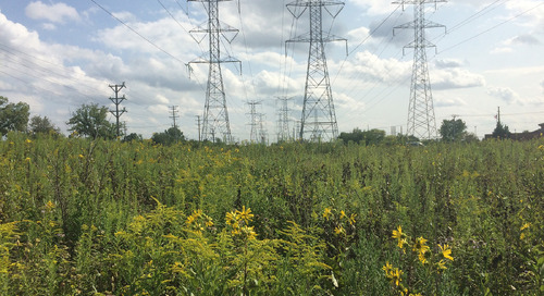 How can utilities help solve the pollinator crisis?