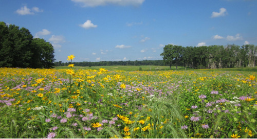 The top 3 things that make managing a forest preserve successful