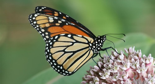 How we can flip the script on pollinator decline
