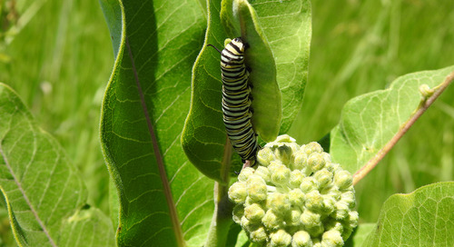 Become a conservation leader: The benefits of restoring pollinator habitat