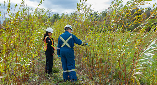 Phytoremediation: What is it, and why might it be right for your contaminated site?