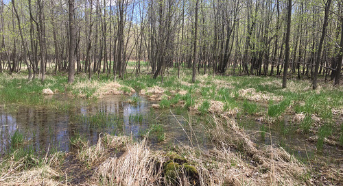 Resilience through diversity: Incorporating climate adaptation into wetland restoration