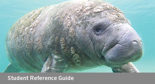 FLORIDA Algebra 2: A Reference Guide (Bid# 3723 & 3725, ISBN 978-1-60153-535-1)