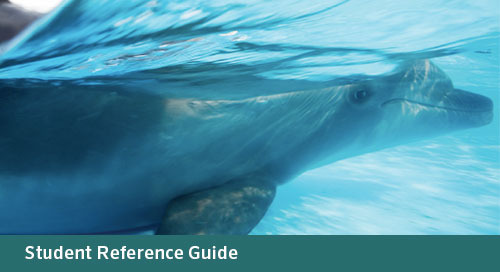 FLORIDA Algebra 1: A Reference Guide Continued (Bid# 3719 & 3721, ISBN 978-1-60153-533-7)