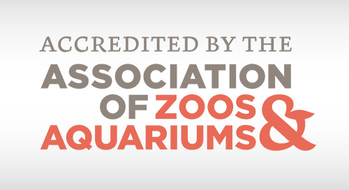 ARTICLE: Jumping for Joy at the Association of Zoos & Aquariums Annual Conference