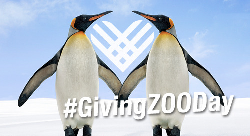 ARTICLE: #GivingZOODay Highlights #GivingTuesday for Zoos & Aquariums