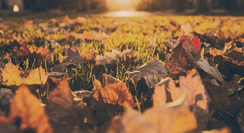 Autumn Team Building Ideas to Fall for! (And no, we don't mean the trust fall).