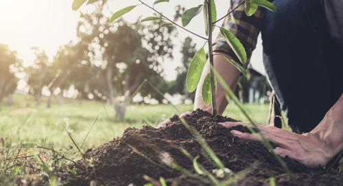 Nos efforts en matière de durabilité au sein de la communauté