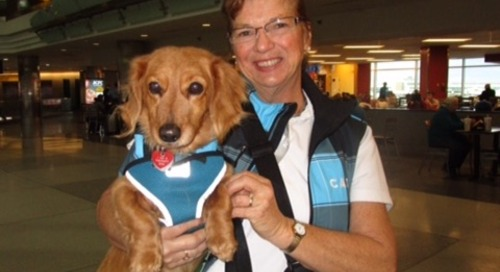 Reducing traveler anxiety at the airport with therapy dogs
