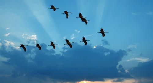 C'est dans le temps des migrations : trois grands projets à prendre en considération cette saison