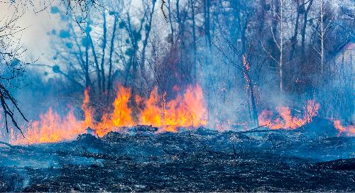 Augmentation des feux de forêt au Canada : la nouvelle normalité