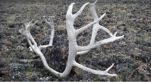 Will Baffinland's Mine Impact Caribou Habitat? GIS has the answer.