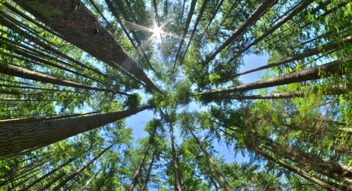 Sustaining Canada's Forests Using Spatial Analytics