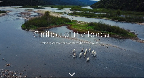 Application du mois : Caribou de la forêt boréale