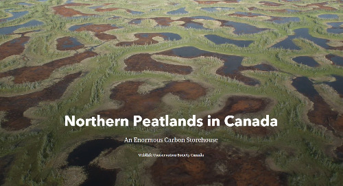 App of the Month: Northern Peatlands in Canada