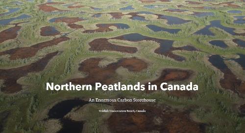 Application du mois : Tourbières du nord du Canada
