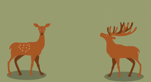 Why did the deer get braces?