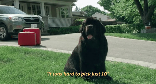 Top 10 things Johnson loves about being a Newfoundland dog