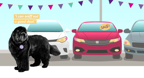 Top 5 Tips for Buying A Used Car