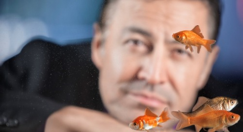 Goldfish blues: There's something fishy about our focus