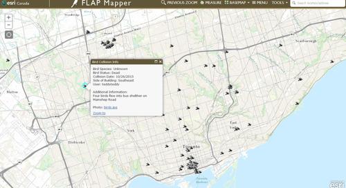 Conscientiser le public aux dangers qui guettent les oiseaux migrateurs au Canada