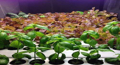 Future Proofing the Food Supply with LED Lighting