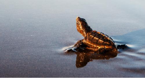 Turtle - Friendly Lighting
