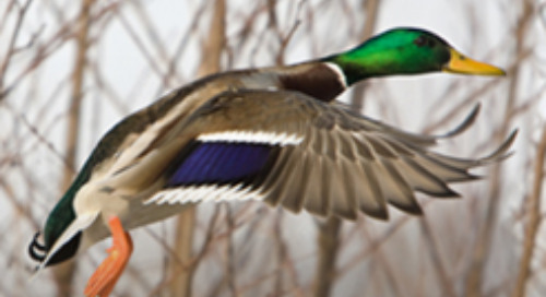Fundraising takes off at Ducks Unlimited