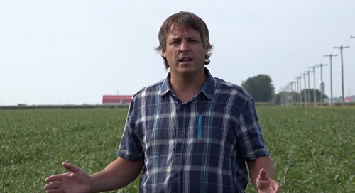 Une méthode rapide pour évaluer la population dans votre champ de soya