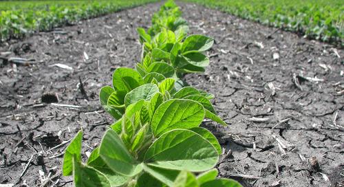 Possibilités de l'agriculture de précision dans le soya
