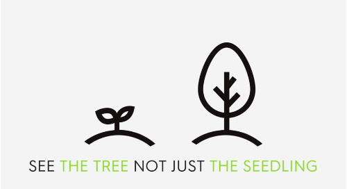 See The Tree Not Just The Seedling