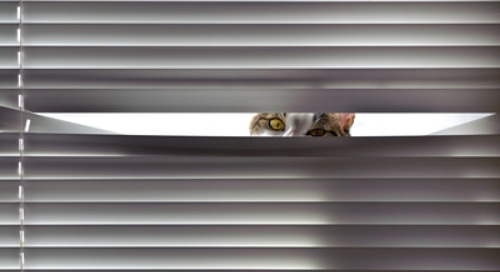 Schrödinger's Cat and The Role of the Observer in Employee Performance