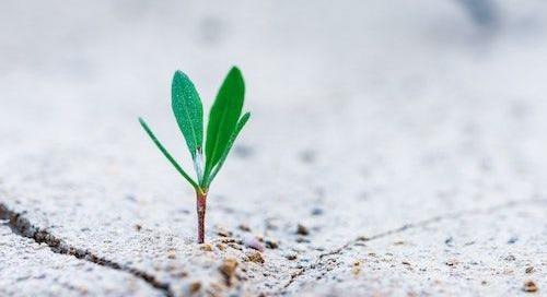 What Is a Regenerative Organization?