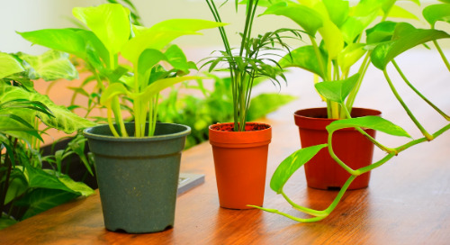 Office Greening Plan - アピリオのオフィス緑化計画