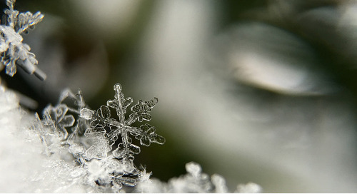 Snowball Method or Snowflake Method? Which is Right for You?