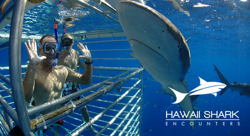 Luring Customers with Marketing Bait: Hawaii Shark Encounters' Success Story