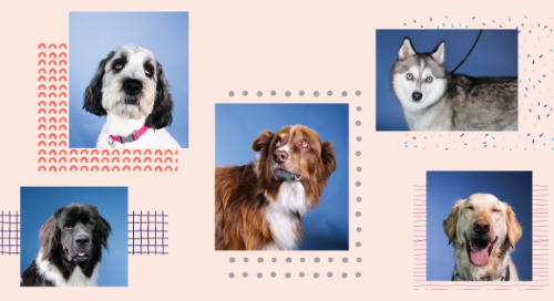 Meet the Dogs of AdRoll