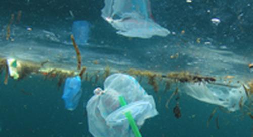 Interdiction du plastique à usage unique : une possibilité de placement?