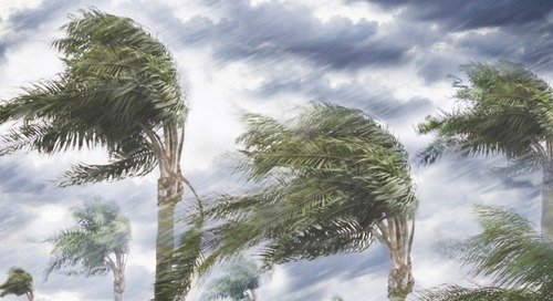Hurricane Preparation and Response Guide