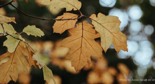 Texas Leaf Peeping