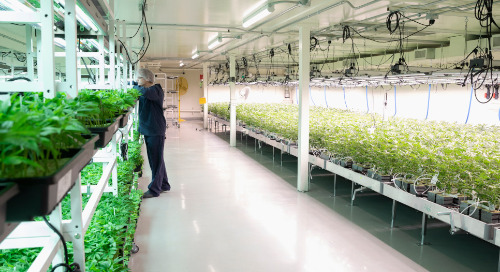 Choosing the right physical security system for your cannabis facility