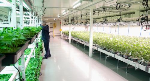 Eligiendo el sistema de seguridad física adecuado para tu instalación de cannabis