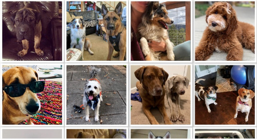 In Honor of National Dog Day: Meet the Dogs of Appirio