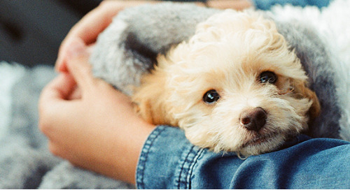 Puppy love can be tough when your pet is sick