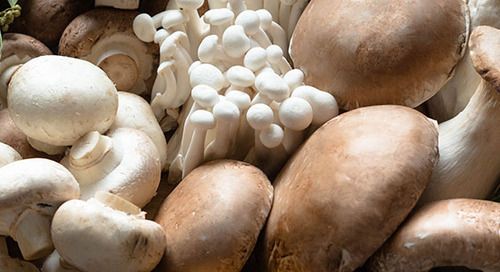 Surprising health benefits of mushrooms